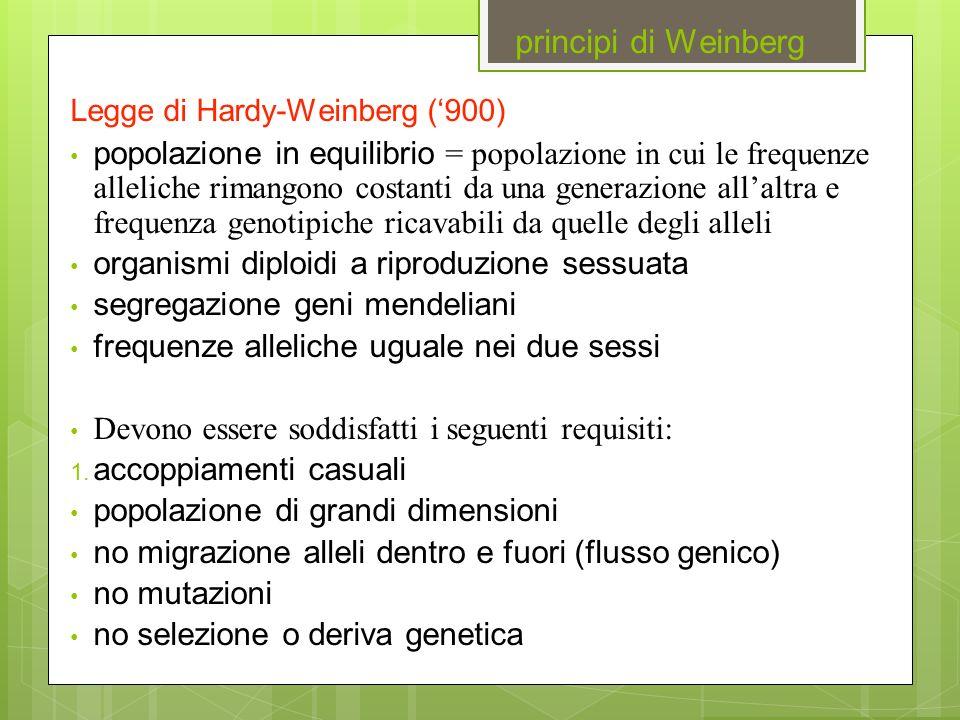 principi di Weinberg Legge di Hardy-Weinberg ('900)