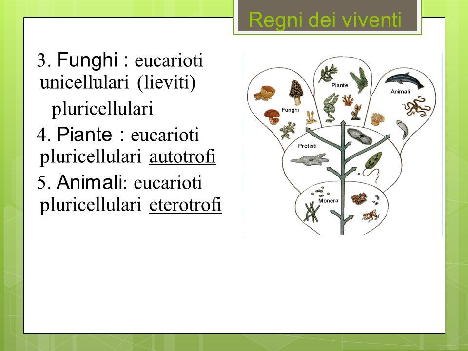 Regni dei viventi 3. Funghi : eucarioti unicellulari (lieviti)