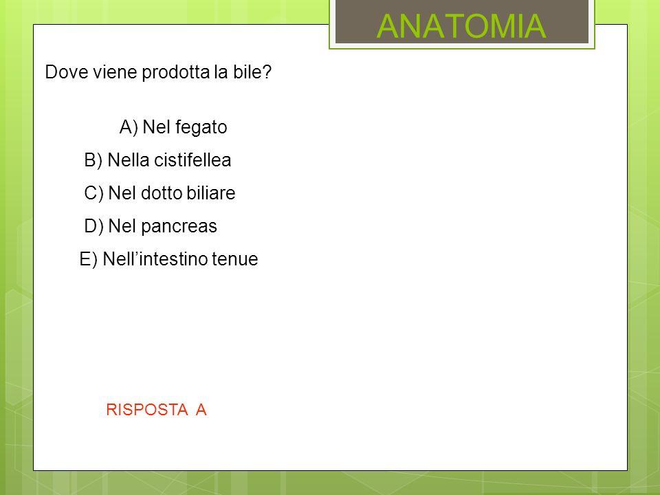 ANATOMIA Dove viene prodotta la bile A) Nel fegato