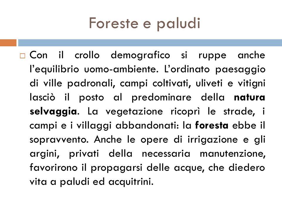Foreste e paludi