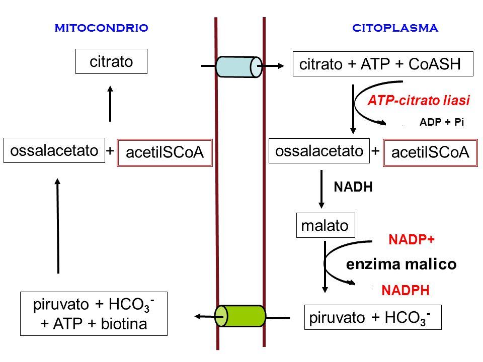 piruvato + HCO3- + ATP + biotina