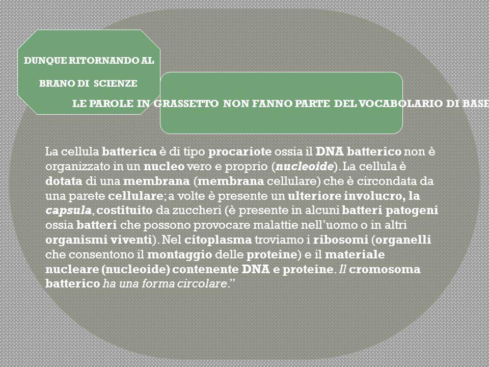 LE PAROLE IN GRASSETTO NON FANNO PARTE DEL VOCABOLARIO DI BASE