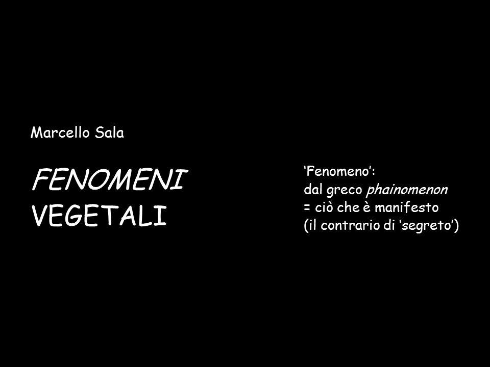 FENOMENI VEGETALI Marcello Sala 'Fenomeno': dal greco phainomenon