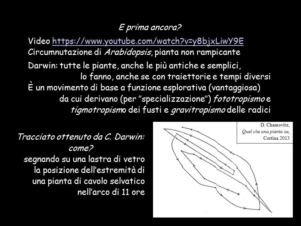 Video https://www.youtube.com/watch v=y8bjxLiwY9E