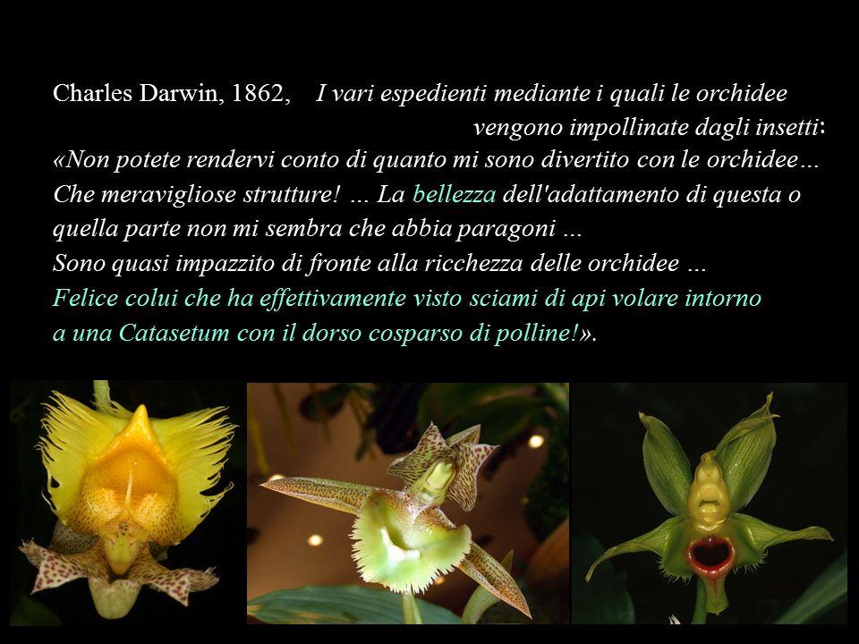 Charles Darwin, 1862, I vari espedienti mediante i quali le orchidee