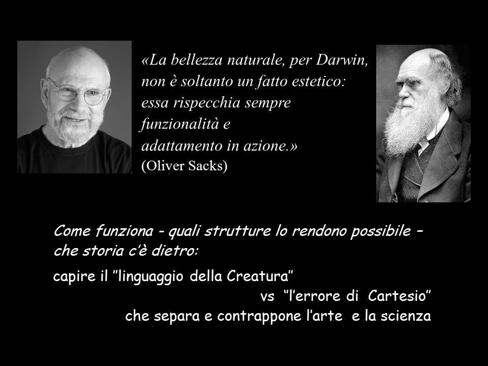 «La bellezza naturale, per Darwin, non è soltanto un fatto estetico: