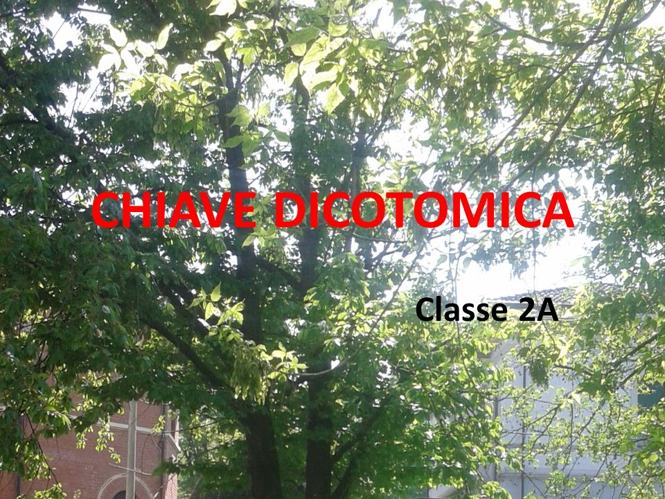 CHIAVE DICOTOMICA Classe 2A