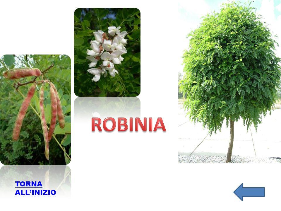 ROBINIA TORNA ALL'INIZIO