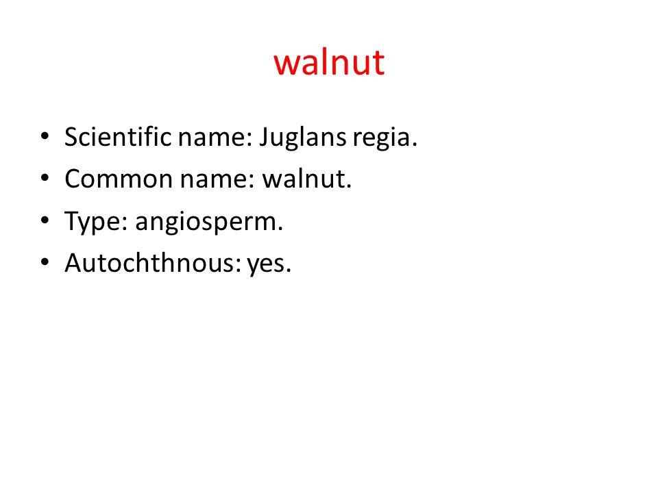 walnut Scientific name: Juglans regia. Common name: walnut.