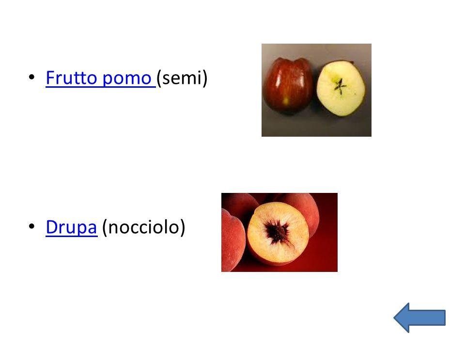 Frutto pomo (semi) Drupa (nocciolo)