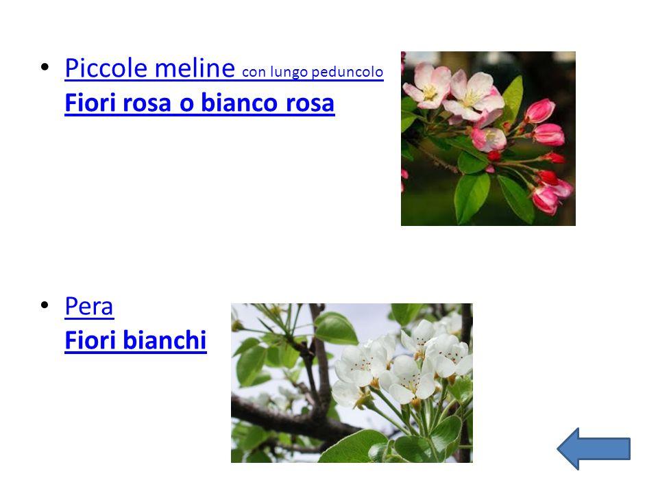 Piccole meline con lungo peduncolo Fiori rosa o bianco rosa