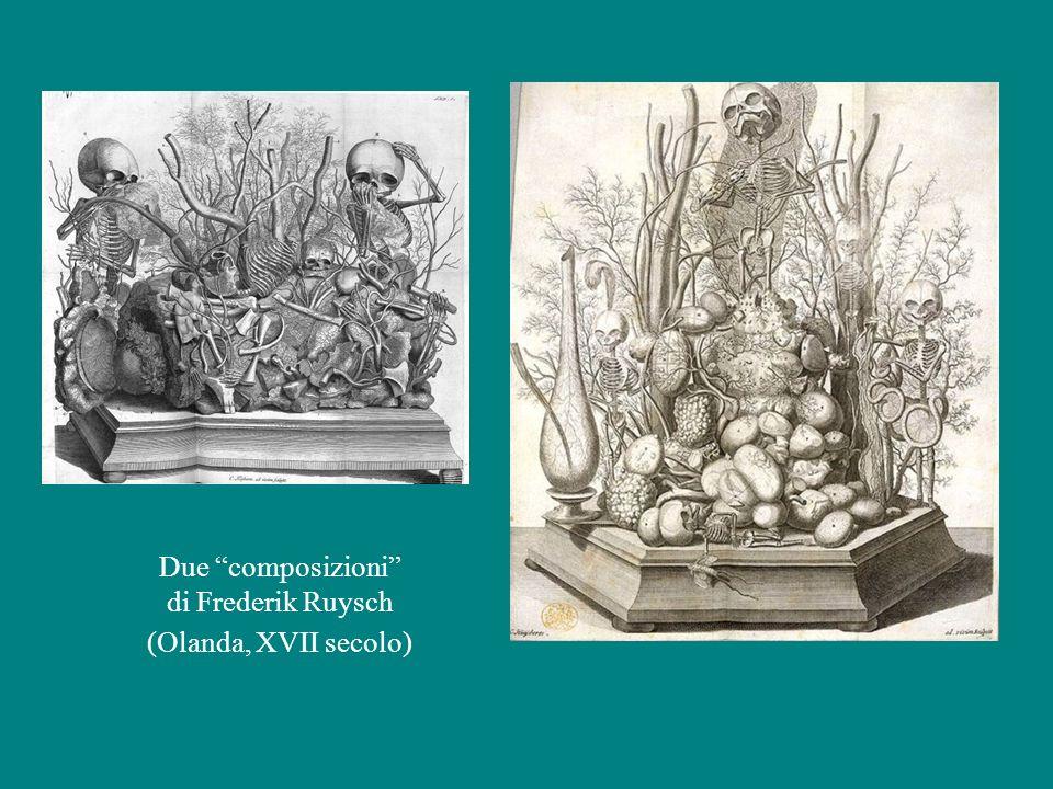 Due composizioni di Frederik Ruysch (Olanda, XVII secolo)