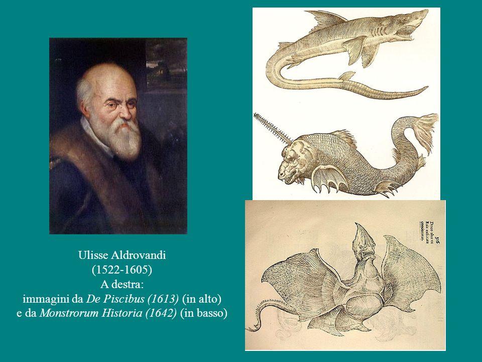 immagini da De Piscibus (1613) (in alto)