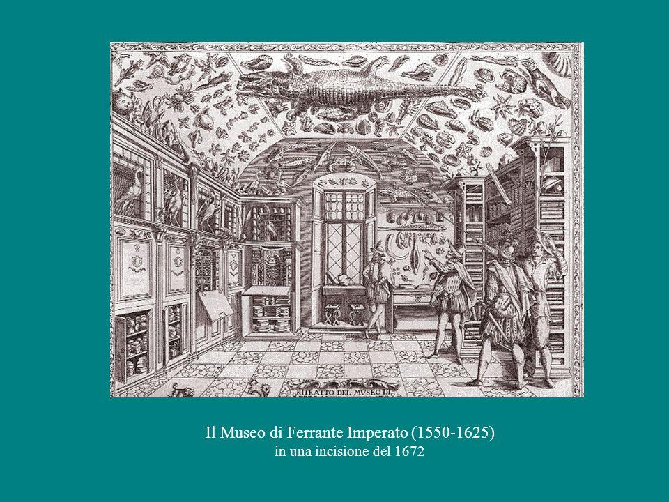 Il Museo di Ferrante Imperato (1550-1625)