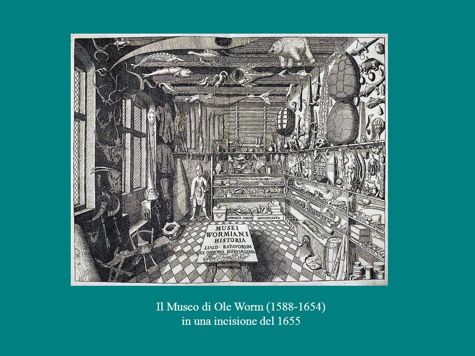 Il Museo di Ole Worm (1588-1654) in una incisione del 1655