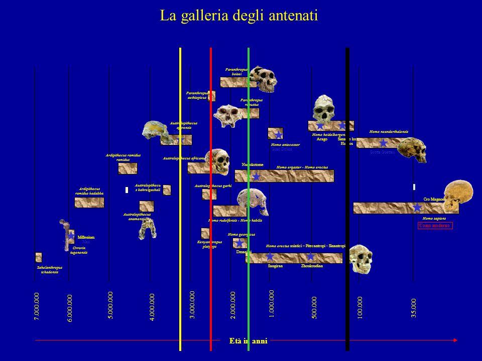La galleria degli antenati
