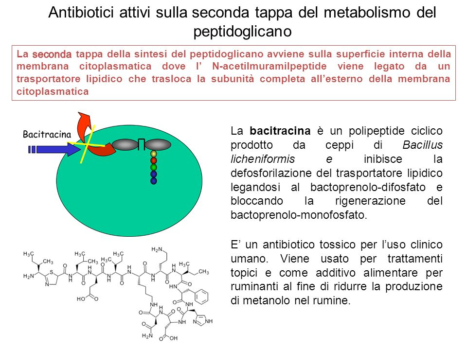 Antibiotici attivi sulla seconda tappa del metabolismo del peptidoglicano