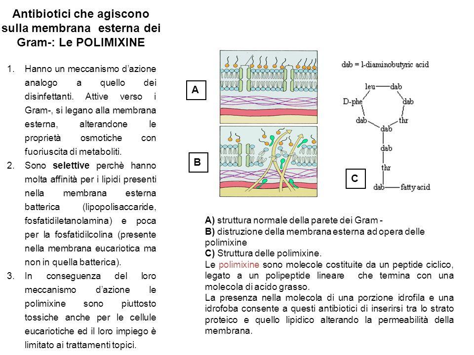 Antibiotici che agiscono sulla membrana esterna dei Gram-: Le POLIMIXINE