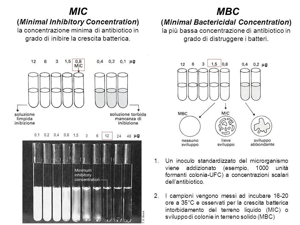 (Minimal Bactericidal Concentration)