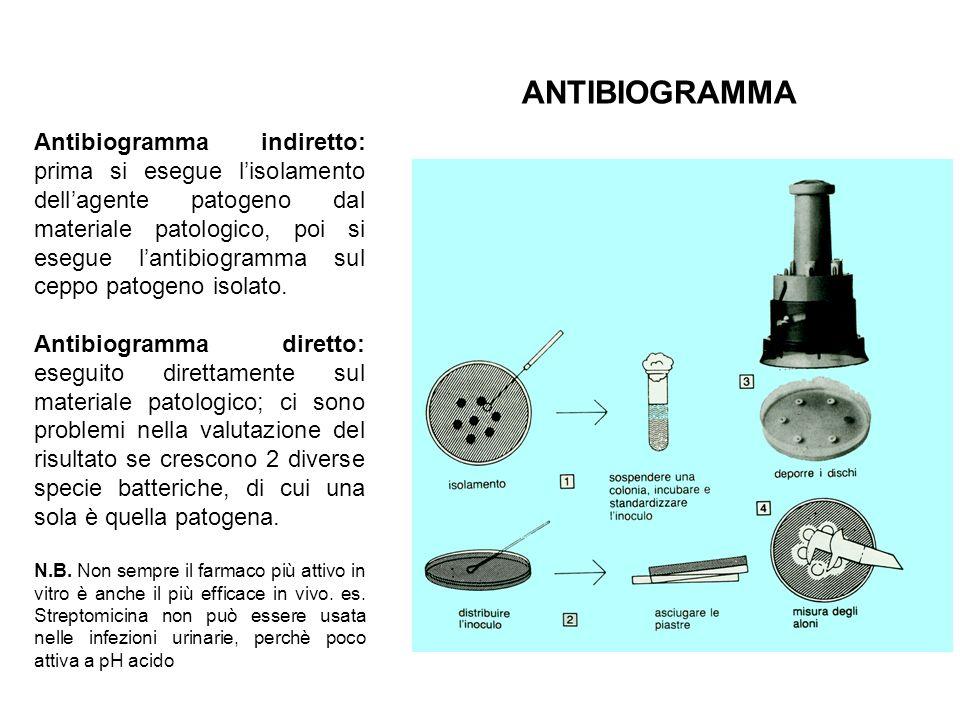 ANTIBIOGRAMMA