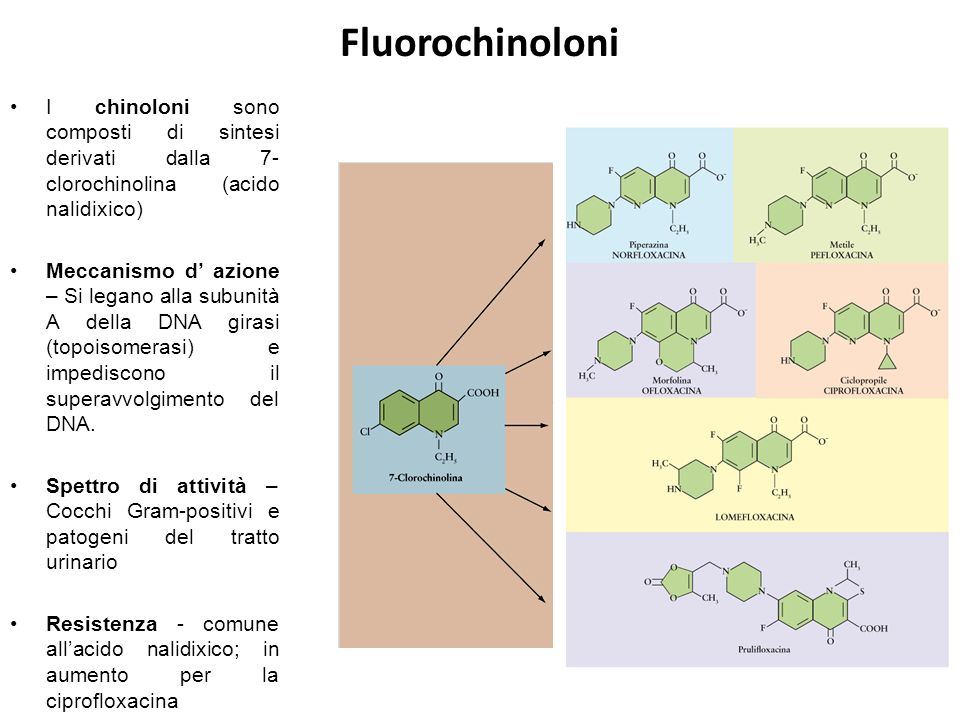 Fluorochinoloni I chinoloni sono composti di sintesi derivati dalla 7-clorochinolina (acido nalidixico)