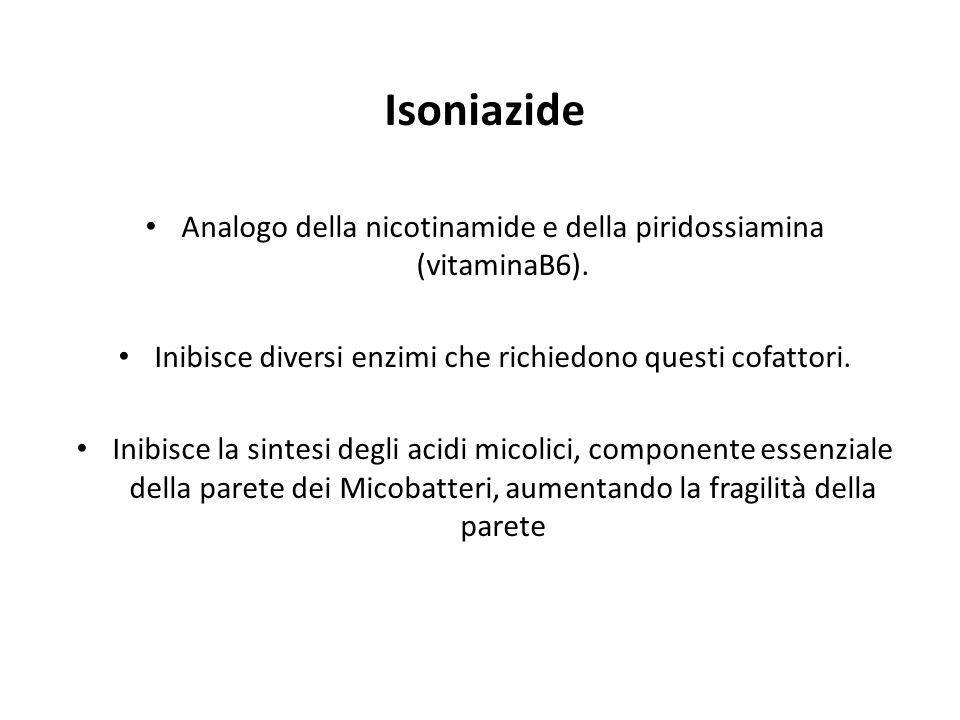 Isoniazide Analogo della nicotinamide e della piridossiamina (vitaminaB6). Inibisce diversi enzimi che richiedono questi cofattori.