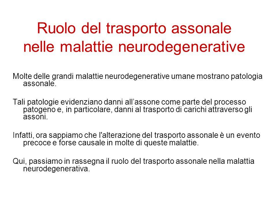 Ruolo del trasporto assonale nelle malattie neurodegenerative