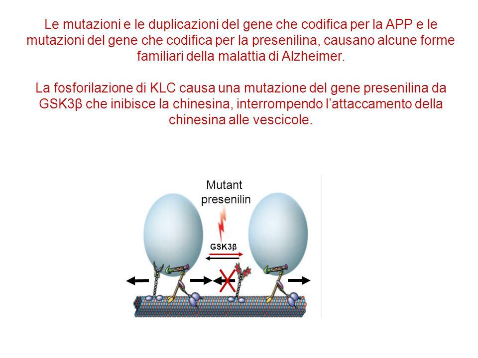 Le mutazioni e le duplicazioni del gene che codifica per la APP e le mutazioni del gene che codifica per la presenilina, causano alcune forme familiari della malattia di Alzheimer.