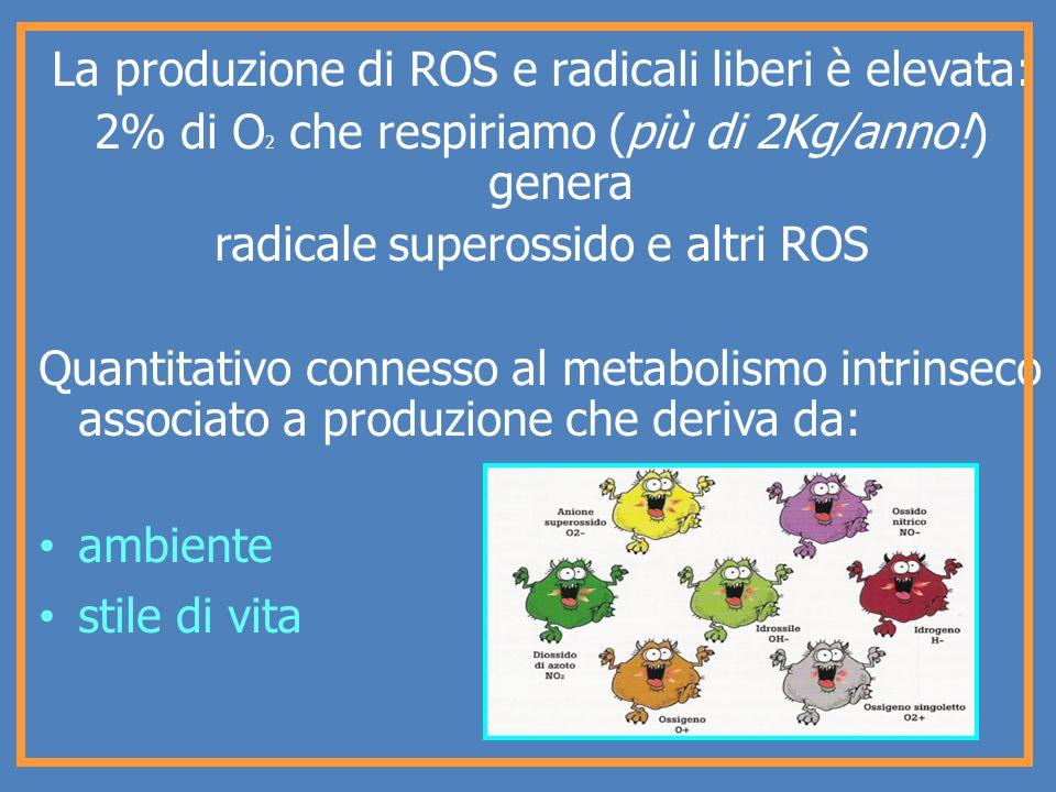 La produzione di ROS e radicali liberi è elevata: