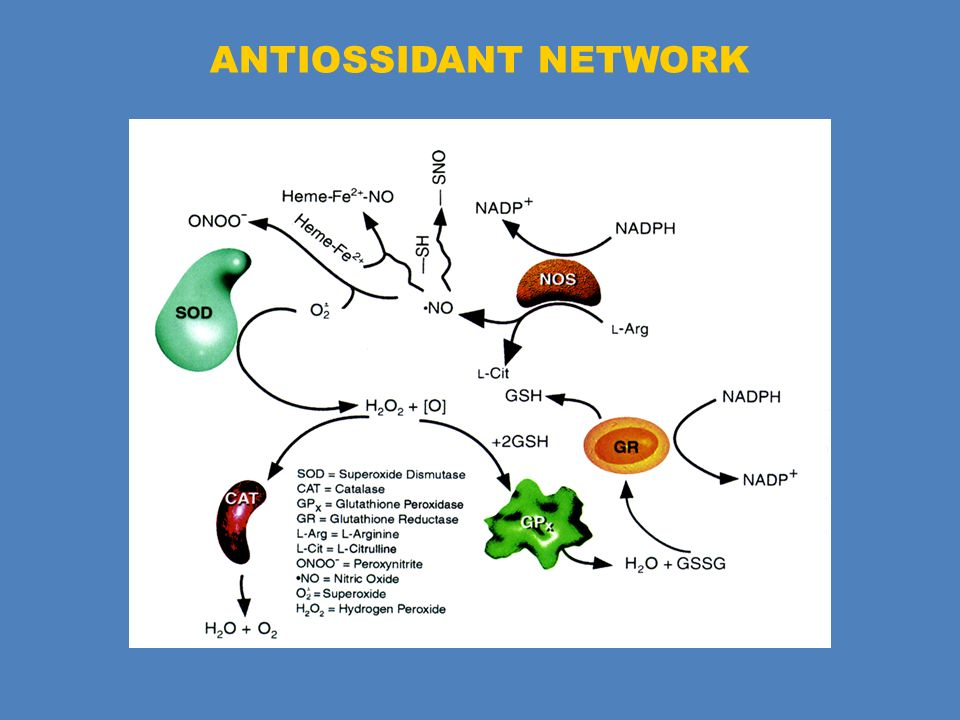 ANTIOSSIDANT NETWORK