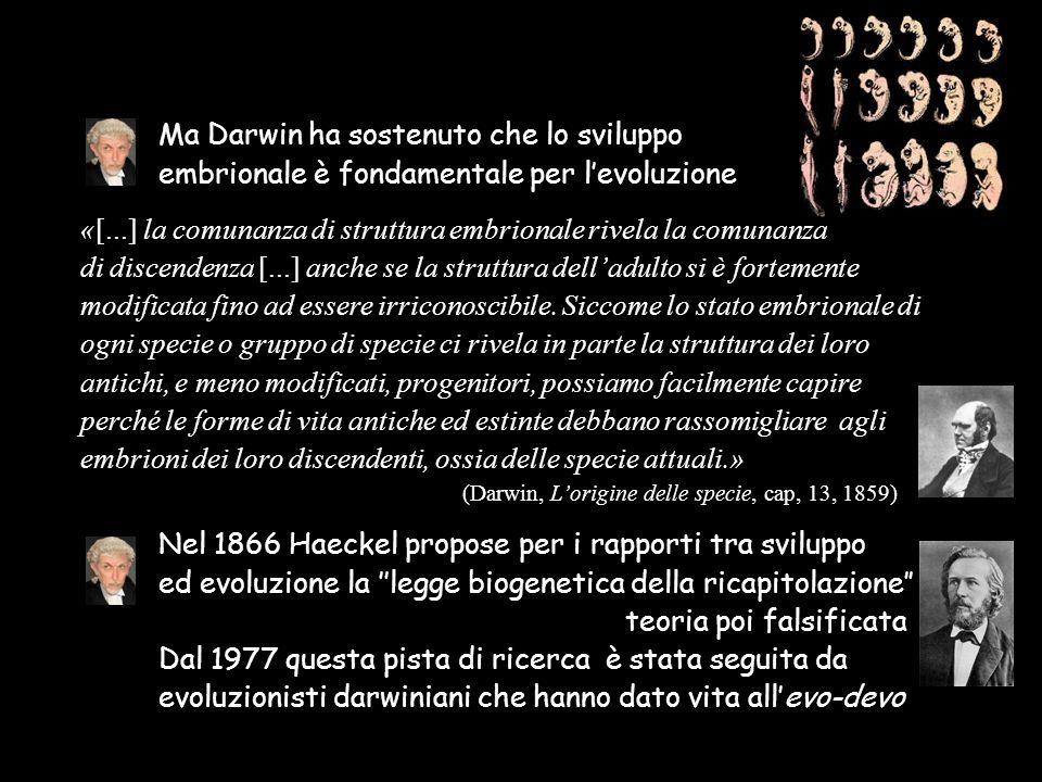 Ma Darwin ha sostenuto che lo sviluppo