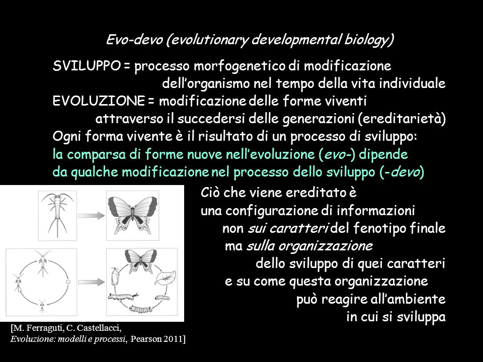 Evo-devo (evolutionary developmental biology)
