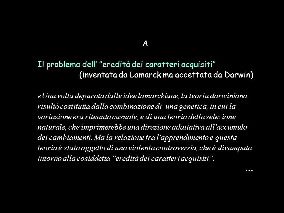 A Il problema dell' ''eredità dei caratteri acquisiti'' (inventata da Lamarck ma accettata da Darwin)