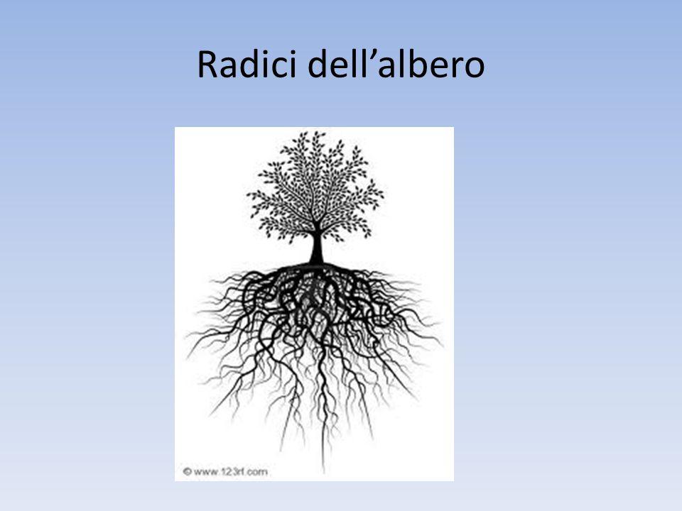 Radici dell'albero