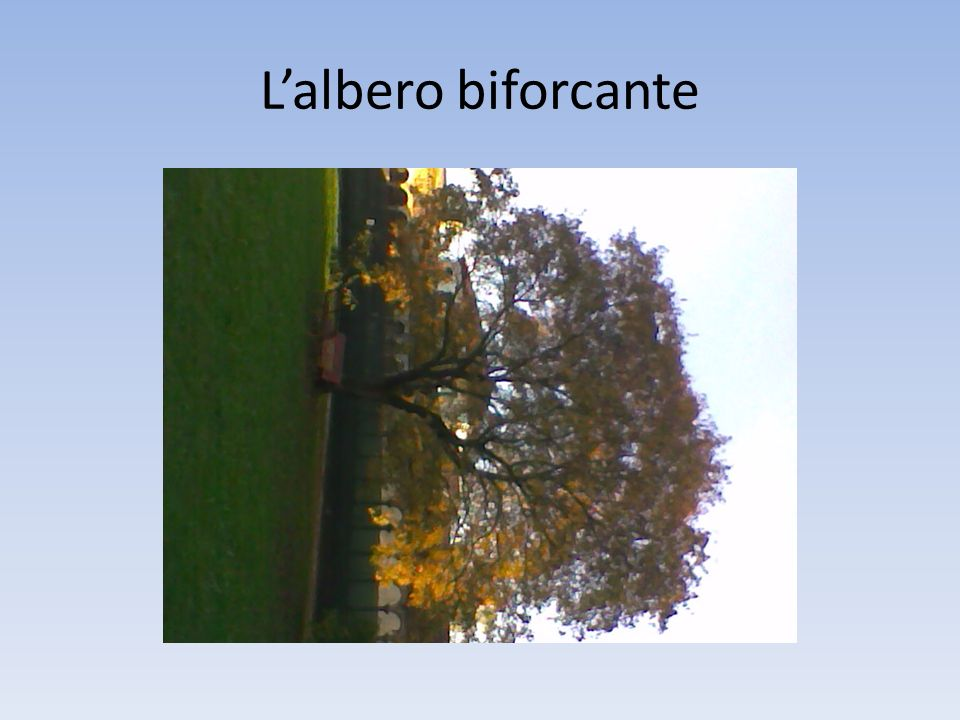 L'albero biforcante