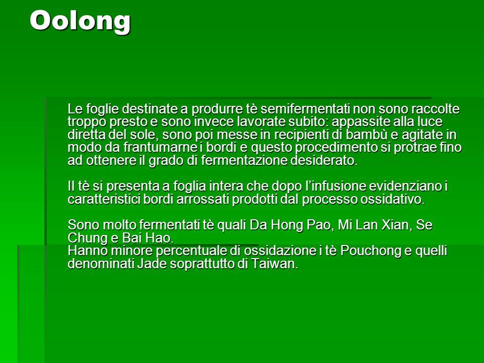 Oolong
