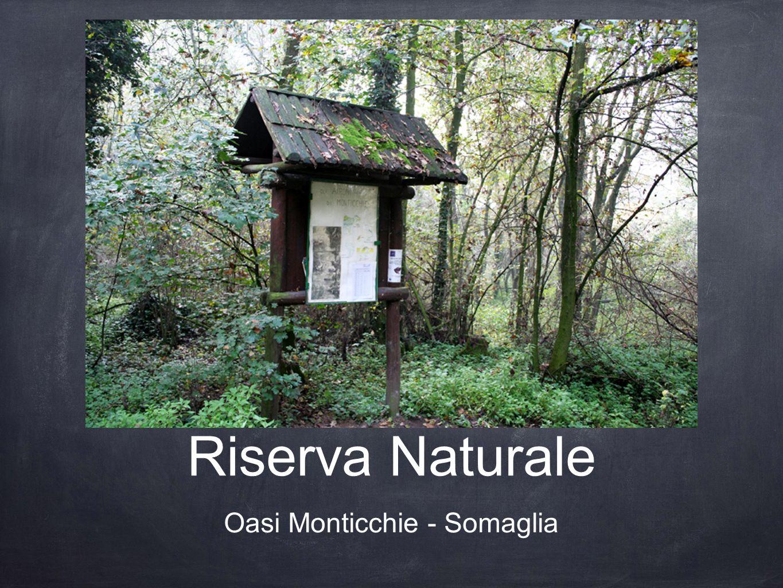Oasi Monticchie - Somaglia