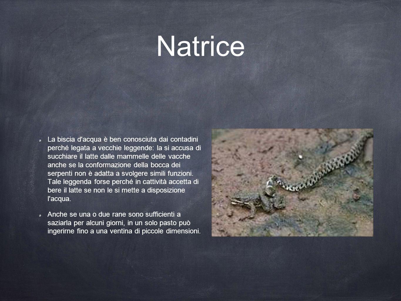 Natrice