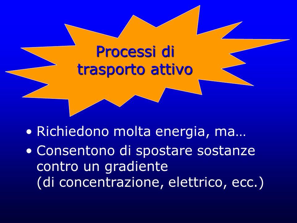 Processi di trasporto attivo