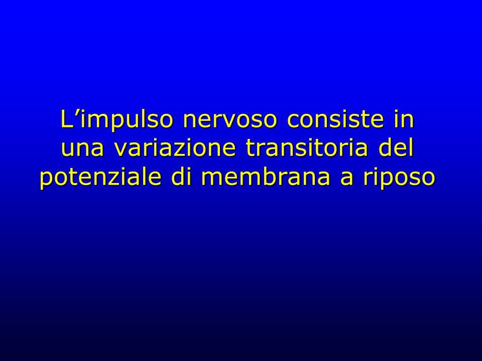 L'impulso nervoso consiste in una variazione transitoria del potenziale di membrana a riposo