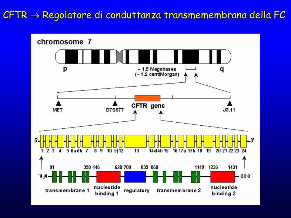 CFTR  Regolatore di conduttanza transmemembrana della FC