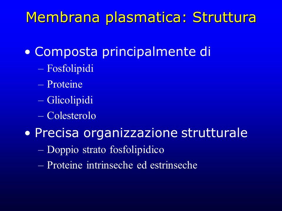 Membrana plasmatica: Struttura