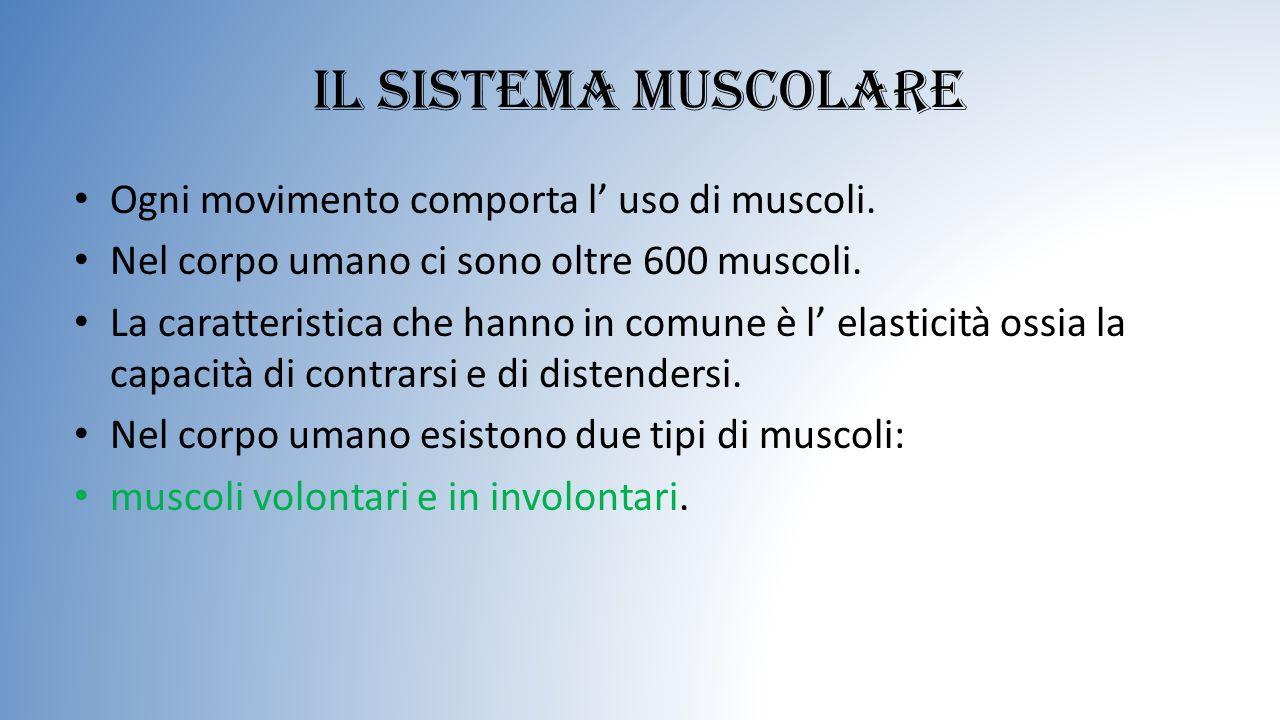 Il sistema muscolare Ogni movimento comporta l' uso di muscoli.