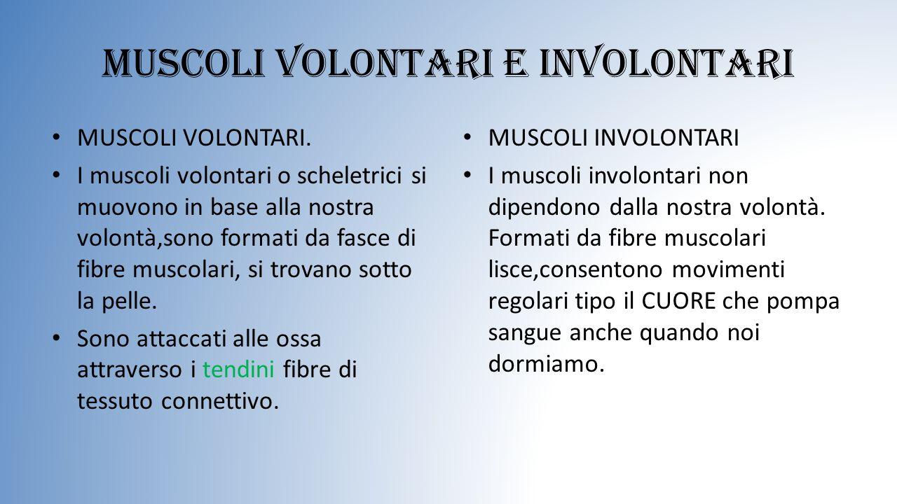 Muscoli volontari e involontari