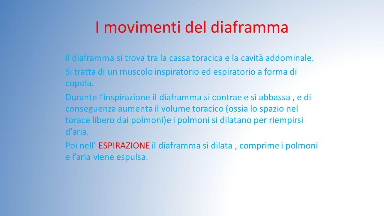 I movimenti del diaframma
