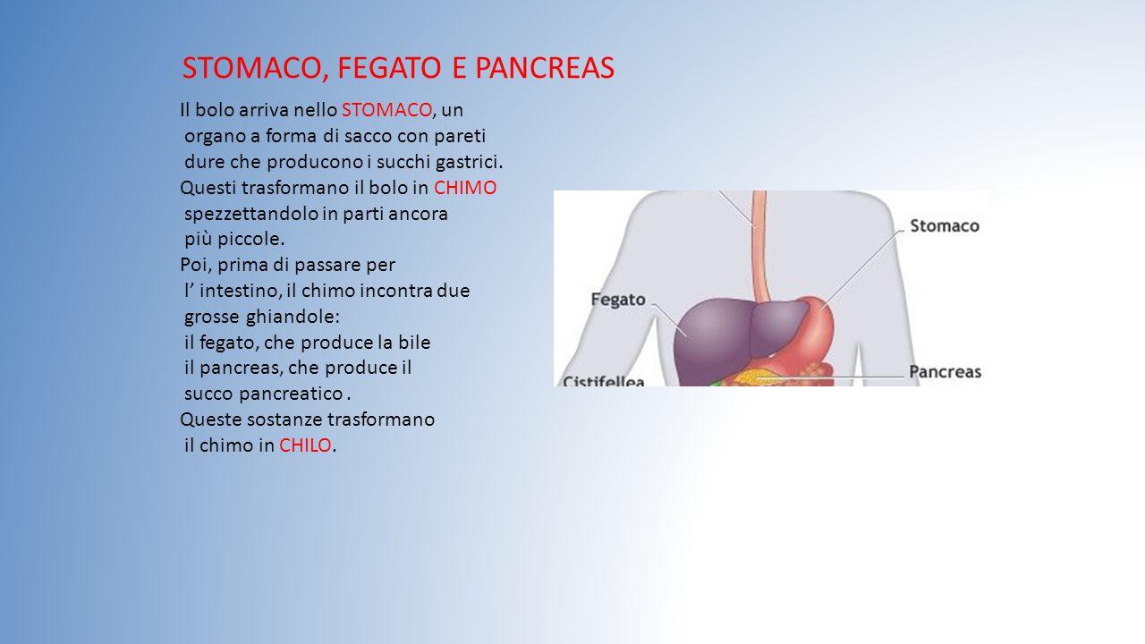 STOMACO, FEGATO E PANCREAS