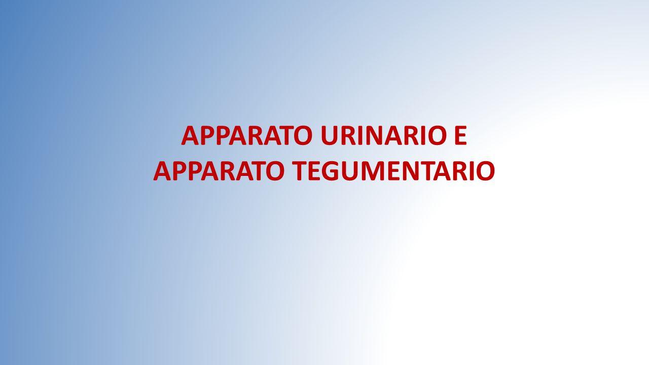 APPARATO URINARIO E APPARATO TEGUMENTARIO