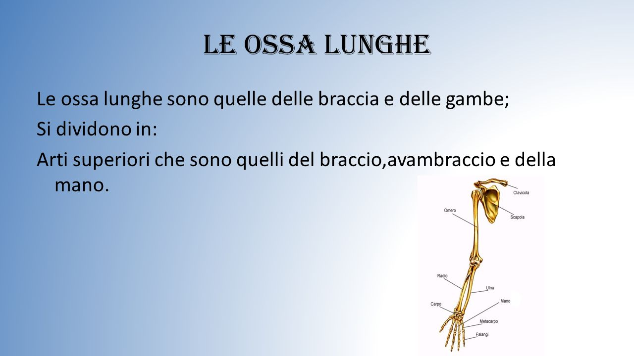Le ossa lunghe