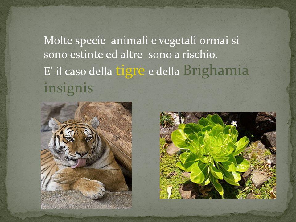 Molte specie animali e vegetali ormai si sono estinte ed altre sono a rischio.