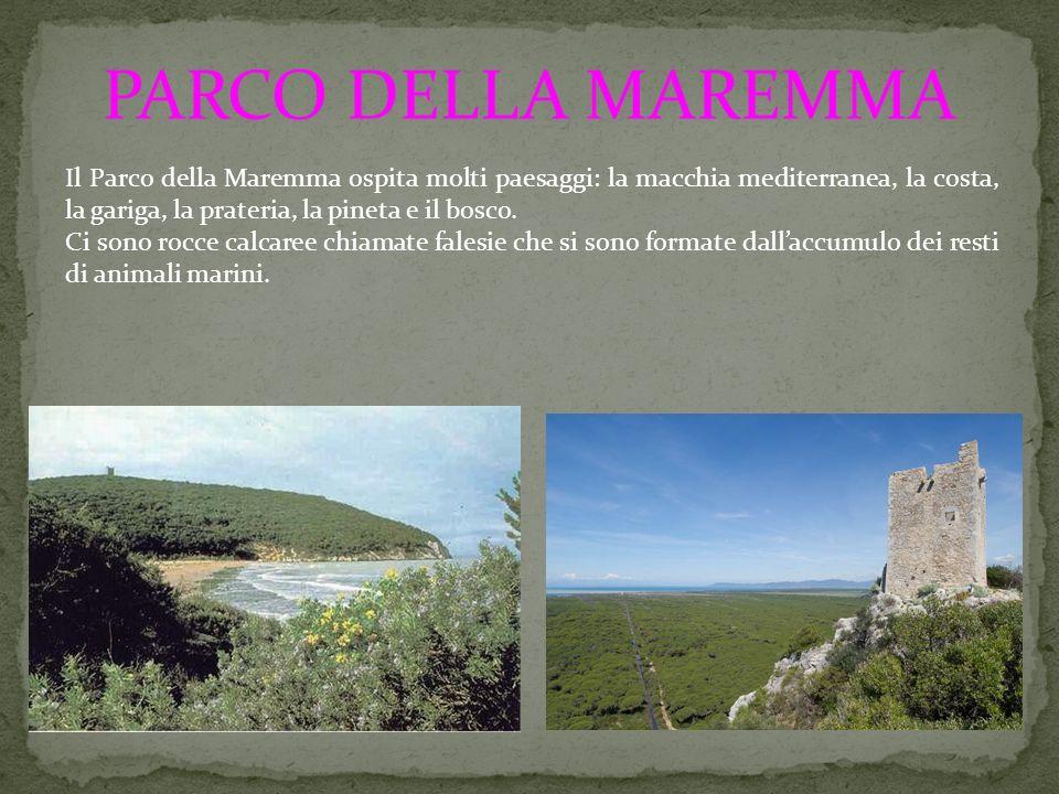 PARCO DELLA MAREMMA Il Parco della Maremma ospita molti paesaggi: la macchia mediterranea, la costa, la gariga, la prateria, la pineta e il bosco.